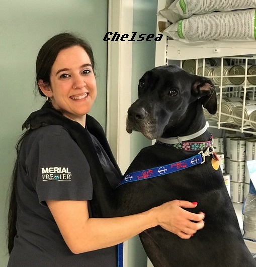 About Fletch, Dr  Deby, Staff, Crystal River Animal Hospital